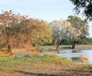 Parco Nazionale del Luangwa Meridionale: Quando andare?