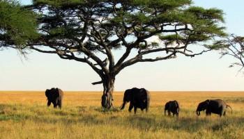Parco Nazionale dell'Alto Niger