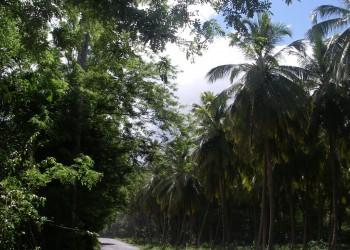 Saint-Joseph (Dominica)