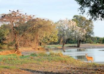 Parco Nazionale del Luangwa Meridionale