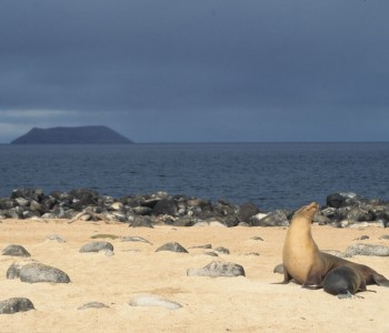 Isole Galapagos