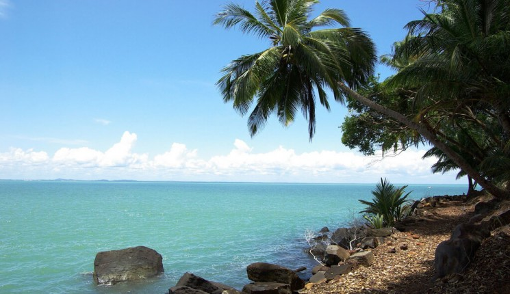 Guiana francese: The shore and the coconut trees
