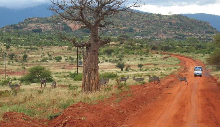 Kenia: African safari route